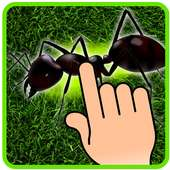 Ant Smasher - Kids Games